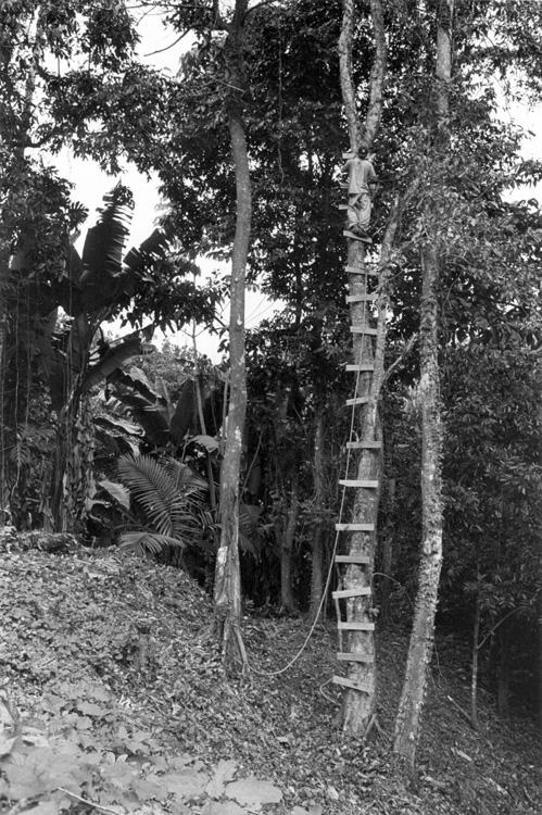 Three Trees for Platform 1