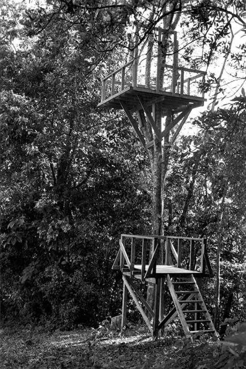 Tree Platform 3 thumbnail