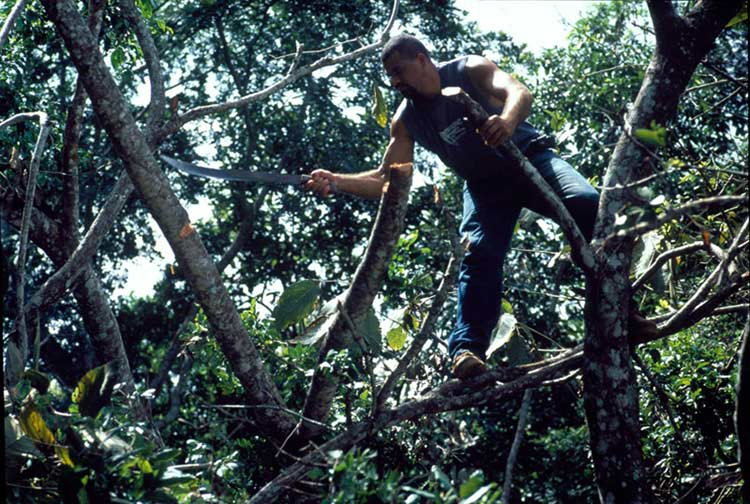 Boguel Cutting Branches